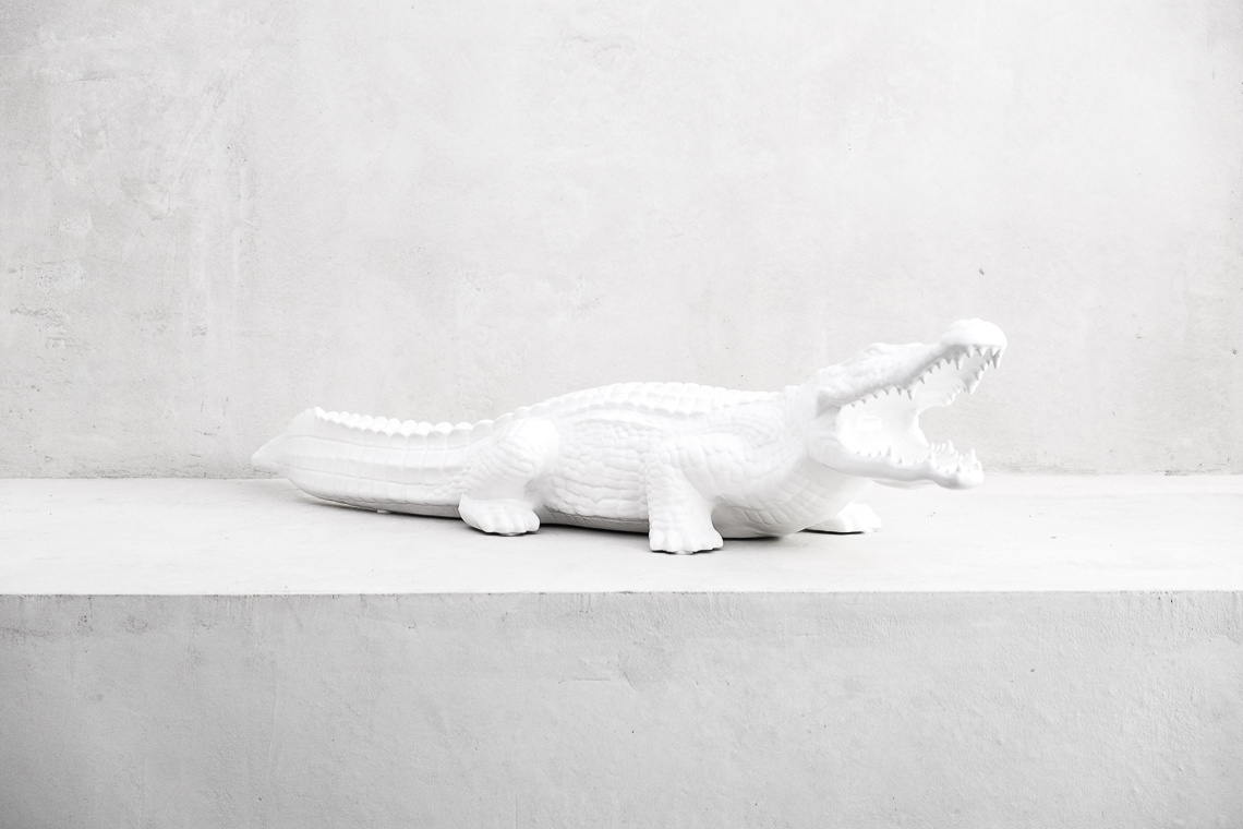 Big white crocodile