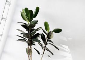 Botánica en casa